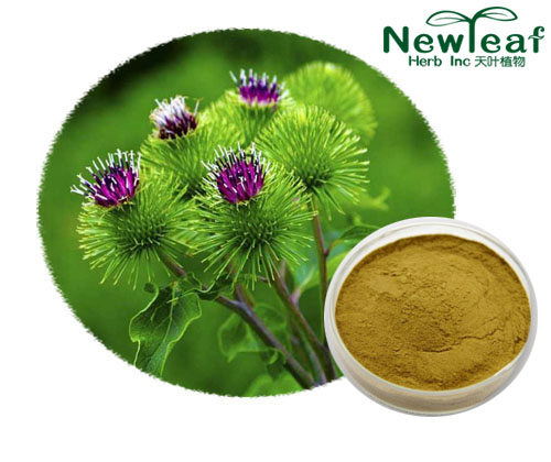 Great Burdock Achene Extract(Arctiin)