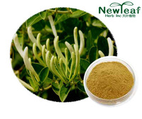 Honeysuckle Extract(Chlorogenic acid)
